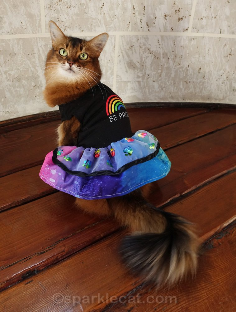 Somali cat showing off the back of her pride dress