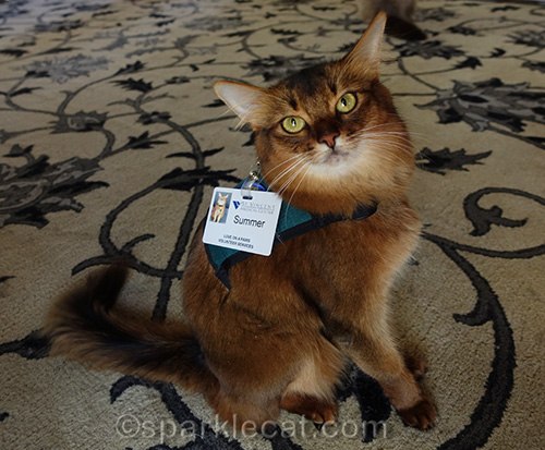 Therapy Cat Harness Selfies
