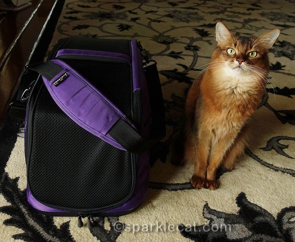 somali cat with Sleepypod Air carrier