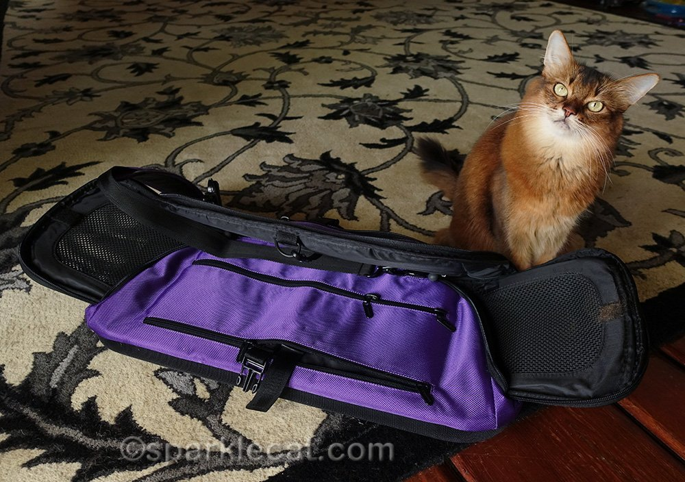 somali cat packing up Air carrier