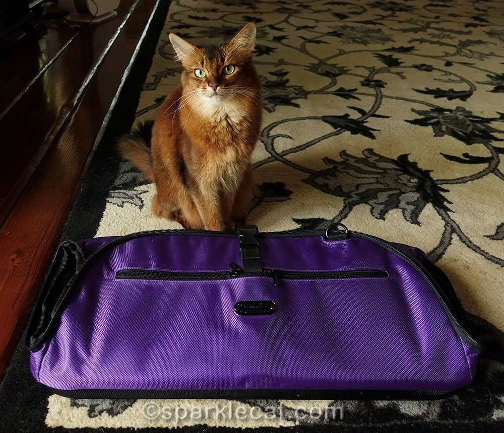 somali cat with flattened Sleepypod Air carrier