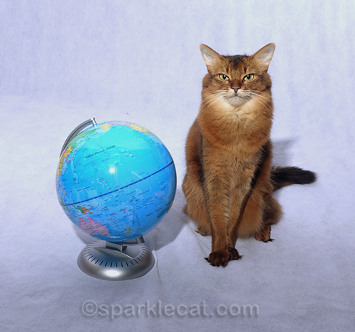 somali cat officially announcing cat world domination day