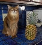 Summer helps her human with the Tiktok pineapple hack... and there is video to prove just how badly it went.