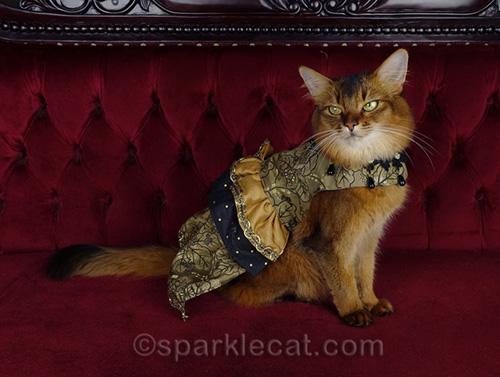 somali cat posing in couture dress