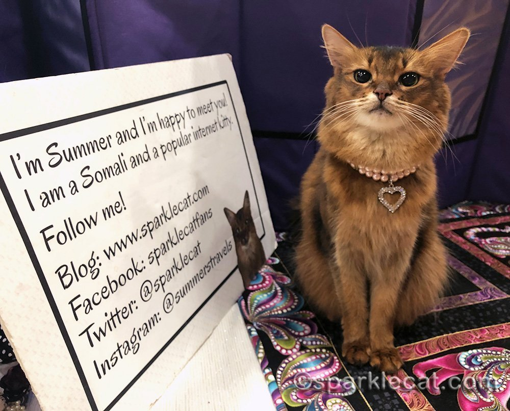 somali cat at vegas cat show