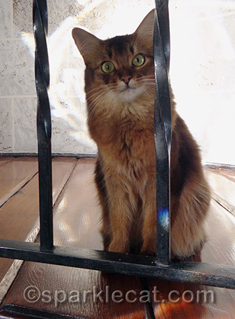 I will never know what it's like to be behind bars - I wish the same for every cat