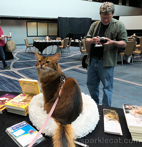 somali cat being photographed at book signing
