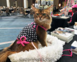 My Busy Conference-Cat Show Weekend