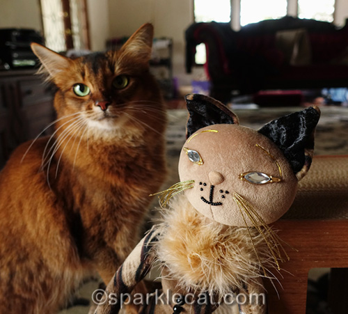 somali cat with one of the scene stealers, Esperanza