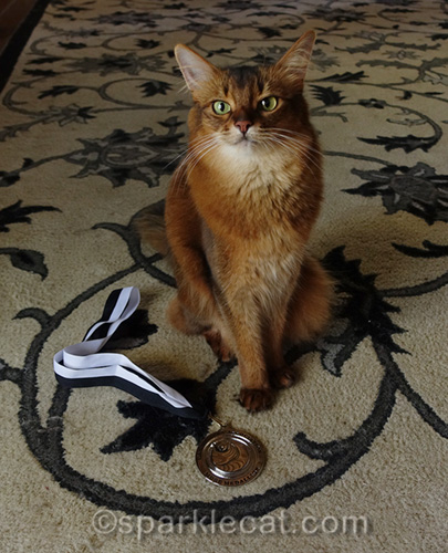somali cat with CWA Muse Medallion