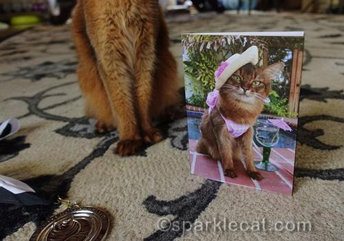somali cat posing with card of herself in a bikini