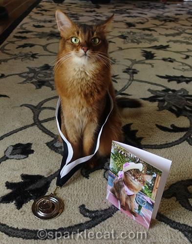 somali cat wearing CWA Muse Medallion