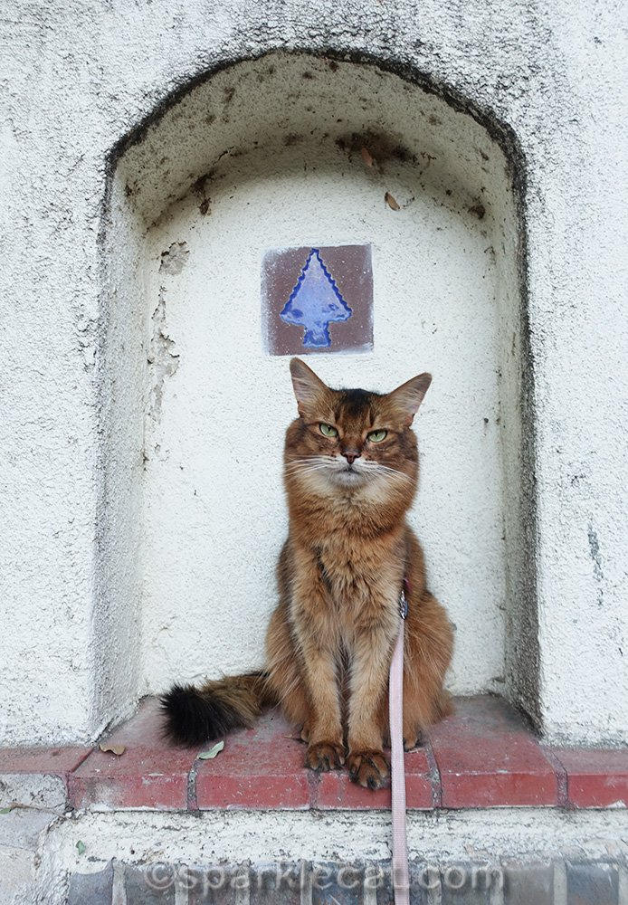 somali cat in little archway