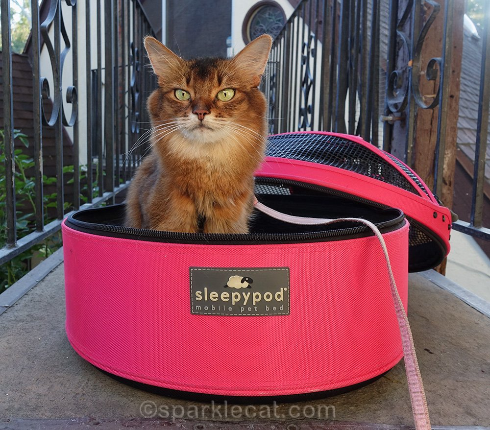 Summer does a photo session with her Sleepypod carrier, including outtakes.