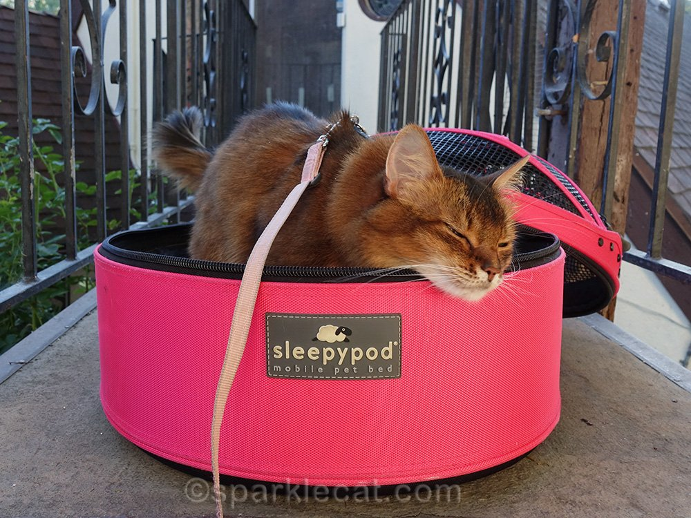 somali cat rubbing her face on Sleepypod carrier