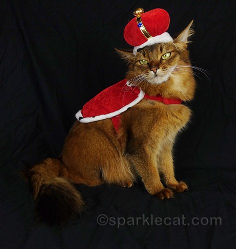 somali cat wearing cape and crown