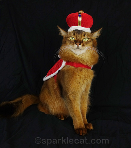 somali cat in crown and cape looking haughty