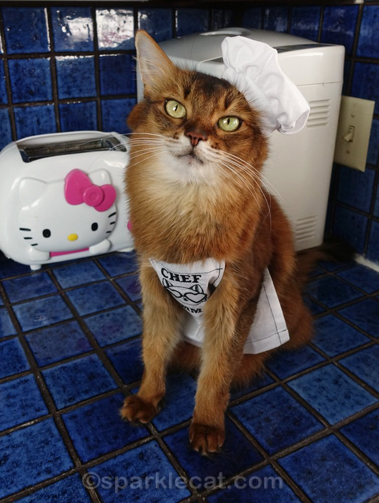somali cat wearing a chef hat and apron