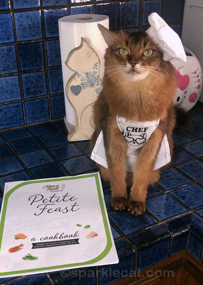 Somali cat in chef hat and apron with Fancy Feast Petite Feast cookbook
