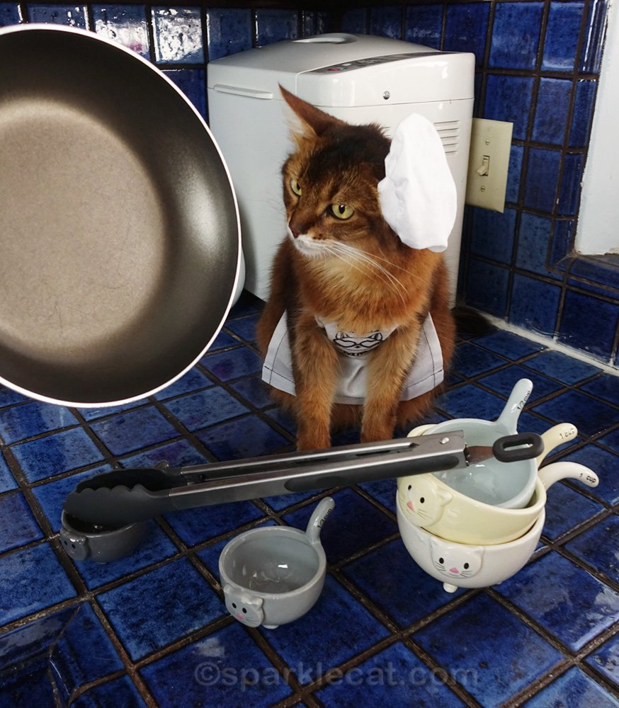 somali cat surrounded by cooking utensils