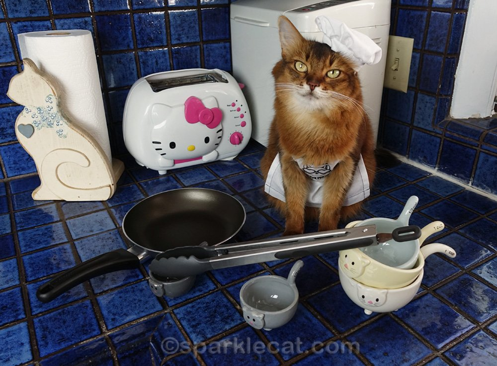 Somali cat in chef apron and hat, ready to get cooking
