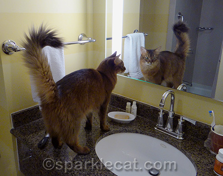 A show kitty must always check her groom before going out in public