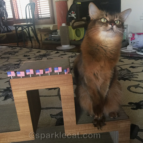 somali cat with paw raised, and flags for flag day