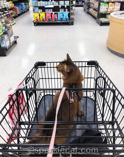 somali cat riding in shopping cart