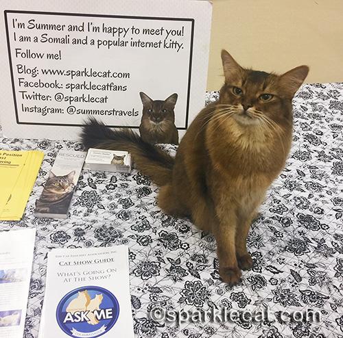 somali pet me cat at a cat show