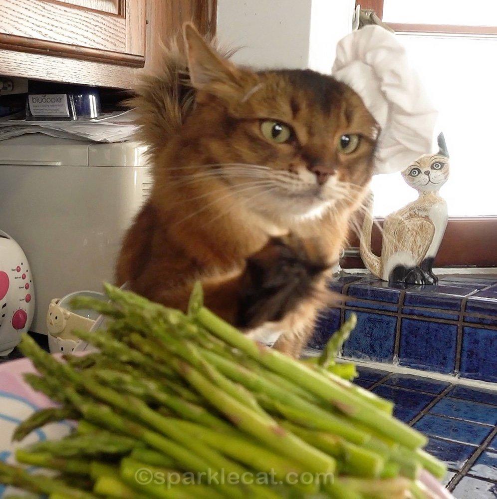 somali cat raises paw over asparagus spears