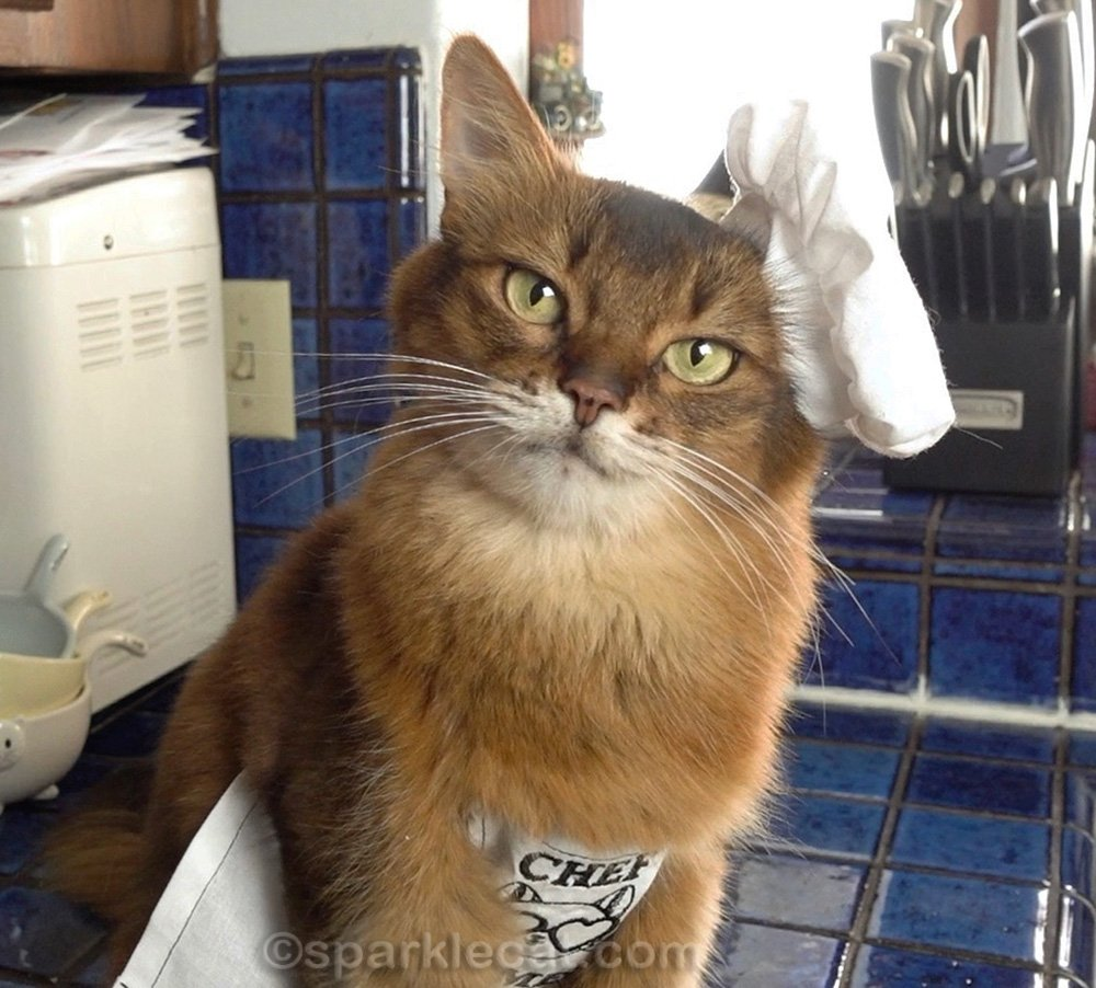 happy somali cat in chef's hat and apron