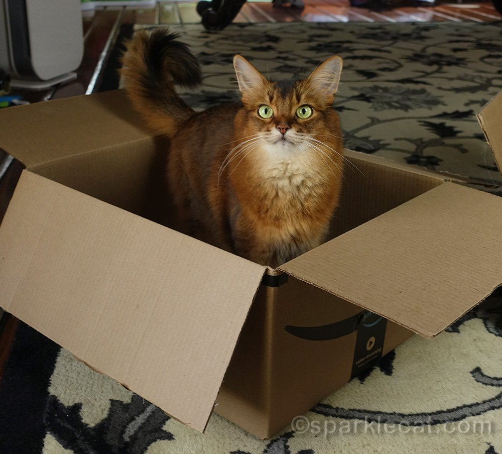 It's International Box Day, and Summer is celebrating by playing the Box Game!