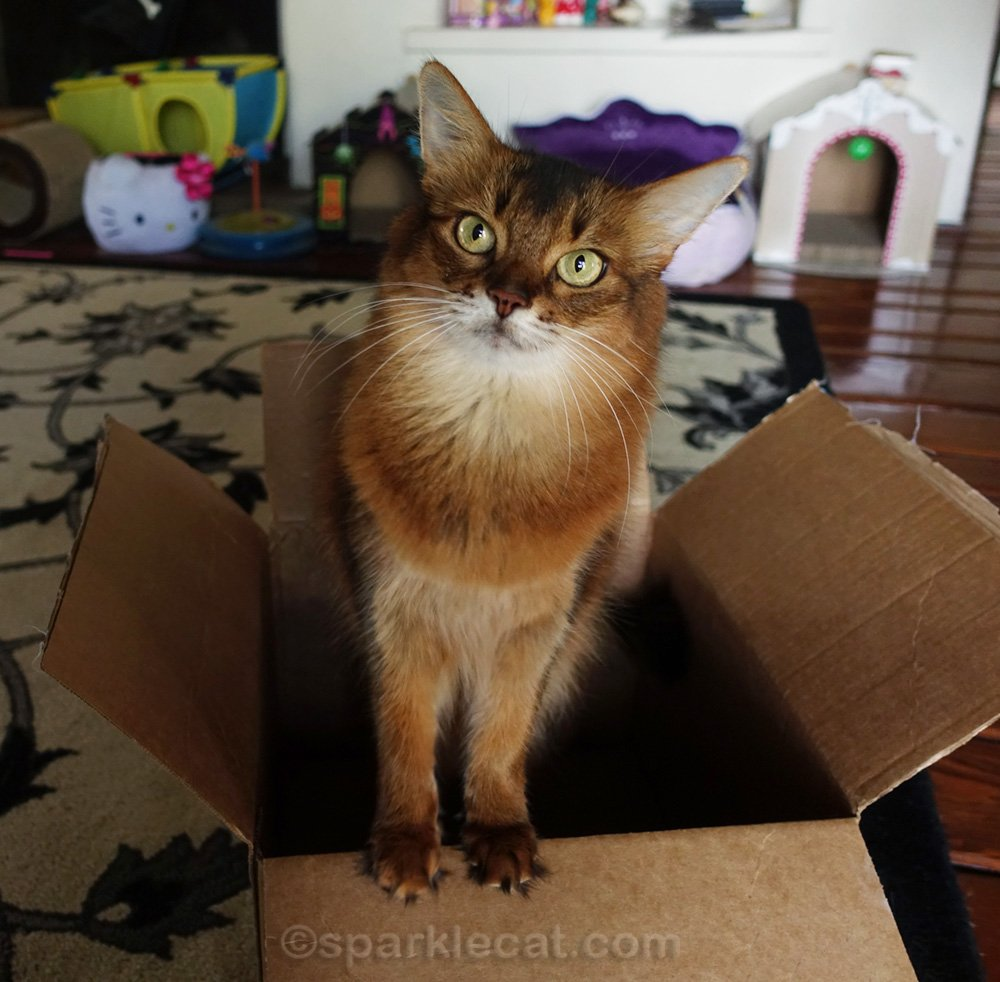 Summer celebrates International Box Day with a short video of her jumping in and out of a box to some fun music.