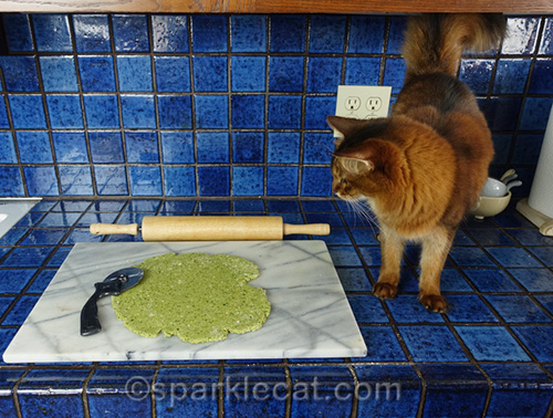 somali cat looking at flattened out cat treat dough