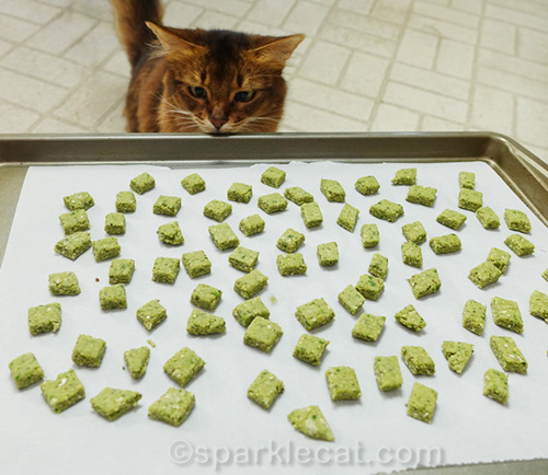 somali cat eyeing cat treats before they go in the oven