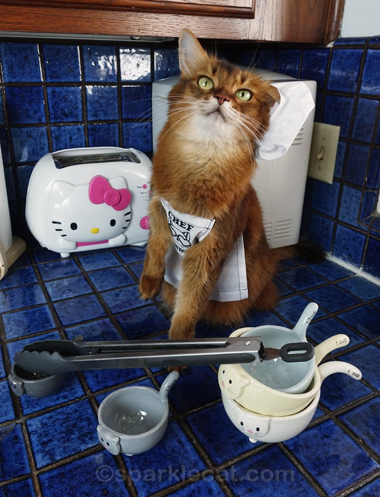 Somali cat on kitchen counter with chef hat falling off