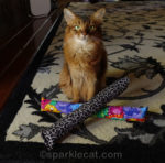 Why We Love Kitty Kick Stix – Plus Discount and Announcement!