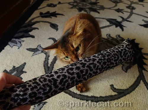 somali cat sniffing the Clawtastically Strong toy