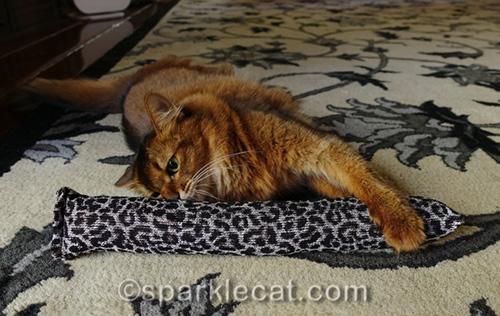 somali cat enjoying a Kitty Kick Stix