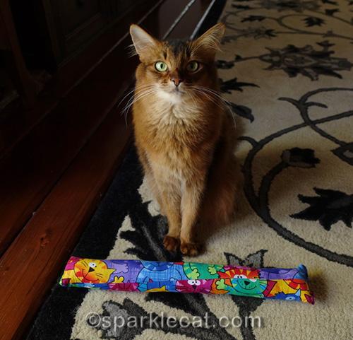 somali cat posing with a Kitty Kick Stix