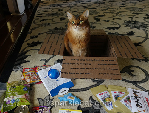 somali cat putting together Cat World Domination Day prize package