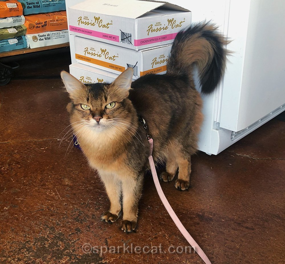 Summer visits the pet shop for some last minute shopping for Cat World Domination Day