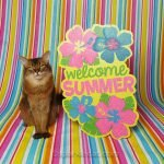 Somali cat posing with a Welcome Summer sign