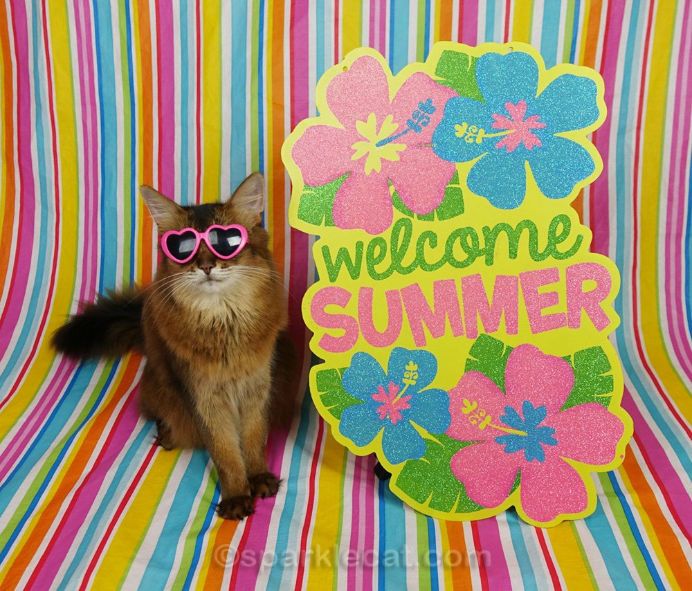 somali cat wearing sunglasses with summertime setting