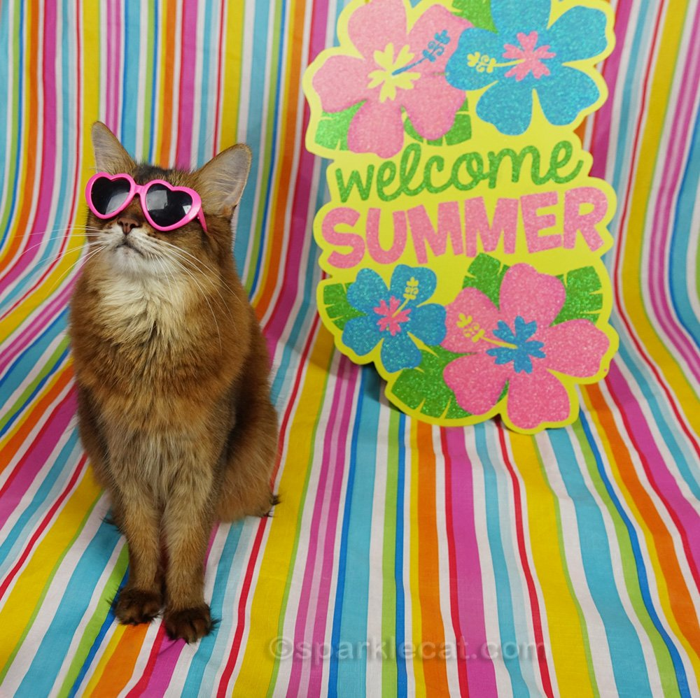 Somali cat not hitting her mark during summer photo session