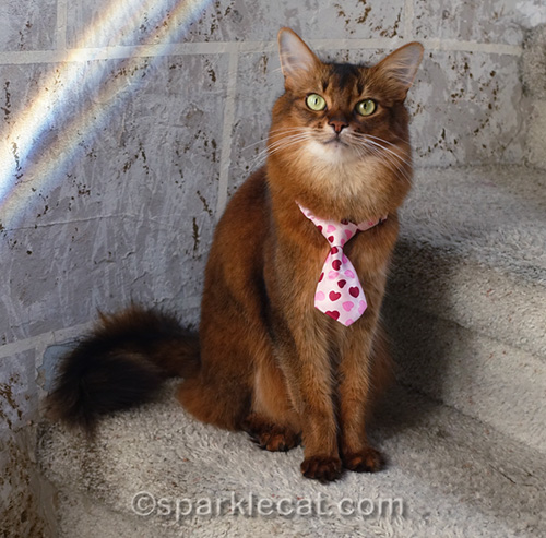 working cat wearing a tie on take your human to work day