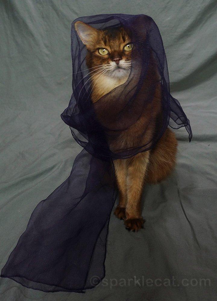 somali cat wearing gauzy purple scarf