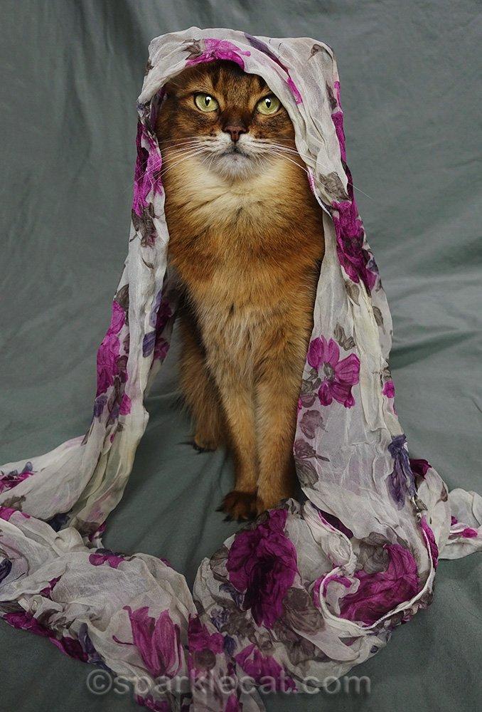 Somali cat wearing flowery scarf on head