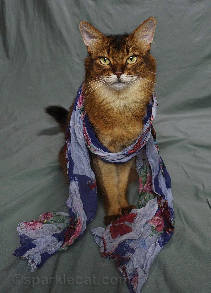 somali cat wearing blue flower scarf