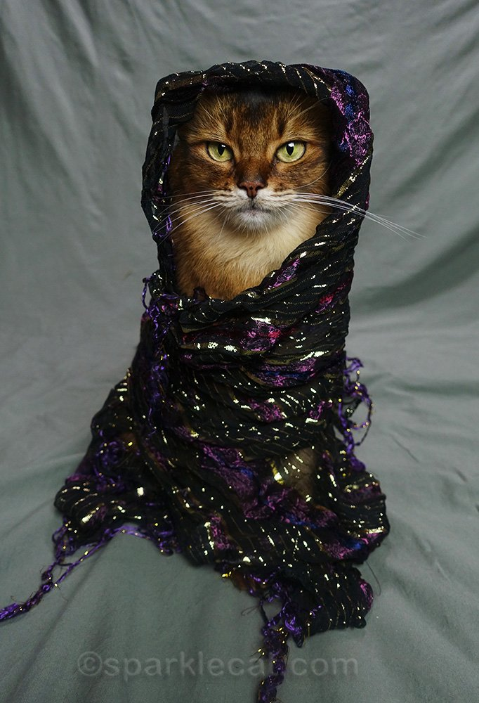 somali cat wearing a scarf that's too big for her
